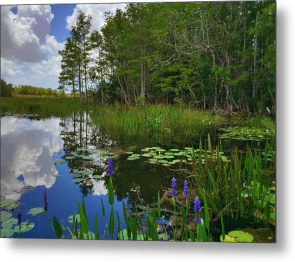 Florida Wetlands Reflections Metal Print