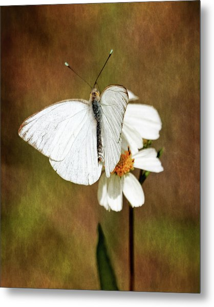 Florida White Metal Print