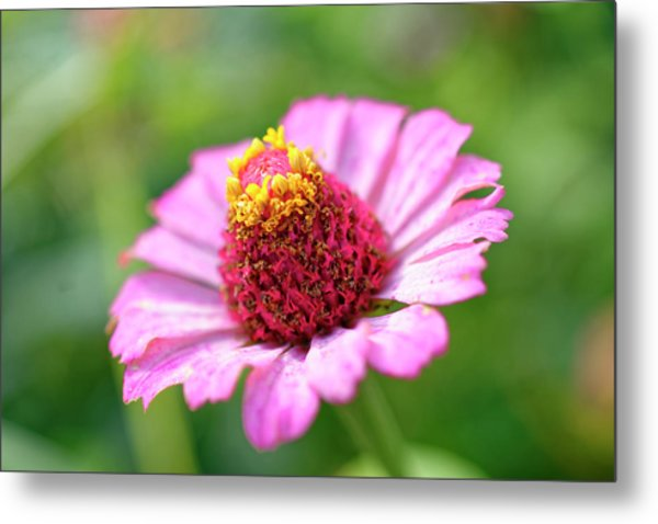 Flower Close-up Metal Print