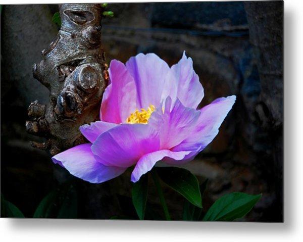 Flower. Dumbarton Oaks Gardens Metal Print