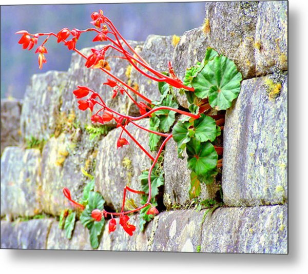 Flower In An Inca Wall Metal Print