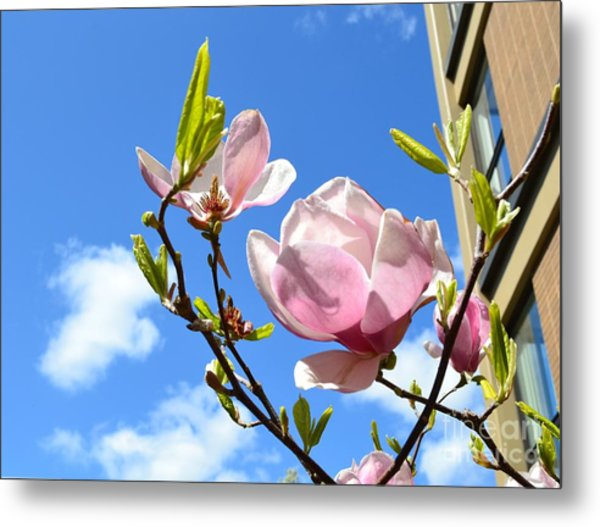 Flower In The Sky Metal Print by Patricia  S