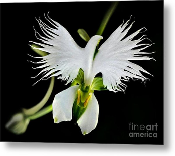 Flower Oddities - Flying White Bird Flower Metal Print