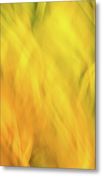 Flower Of Fire 2 Metal Print