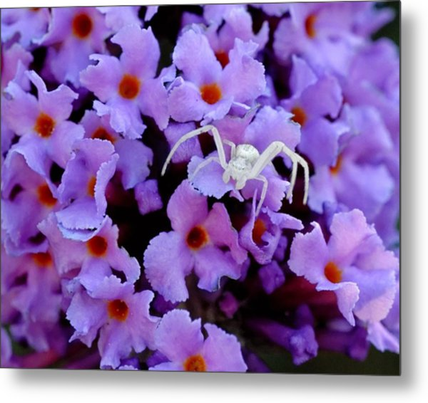 Flower Spider Metal Print
