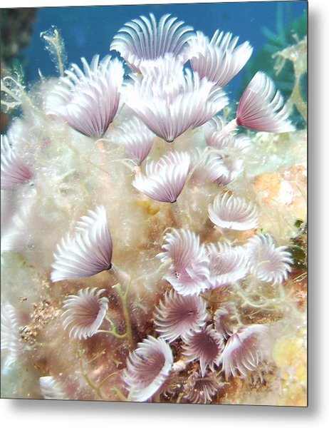 Flower Tube Worms Metal Print by Cherry Woodbury