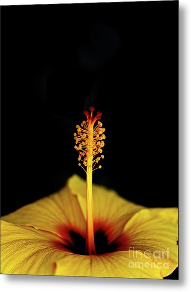Flower_06 Metal Print