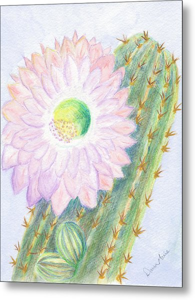 Flowering Cactus Metal Print by Dawn Marie Black