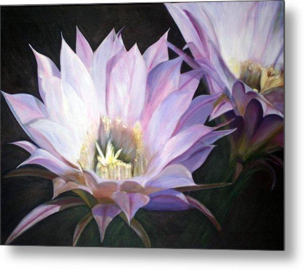 Flowering Cactus Metal Print by Fiona Jack