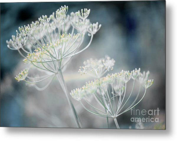 Metal Print featuring the photograph Flowering Dill Clusters by Elena Elisseeva