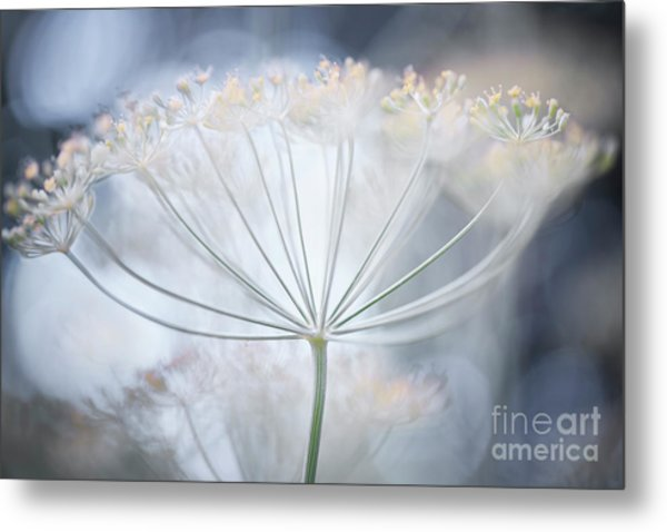 Metal Print featuring the photograph Flowering Dill Details by Elena Elisseeva