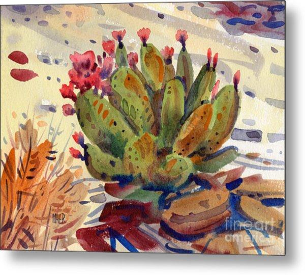 Flowering Opuntia Metal Print