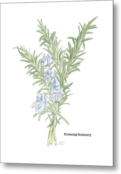 Flowering Rosemary Metal Print