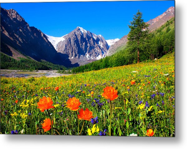 Flowering Valley. Mountain Karatash Metal Print
