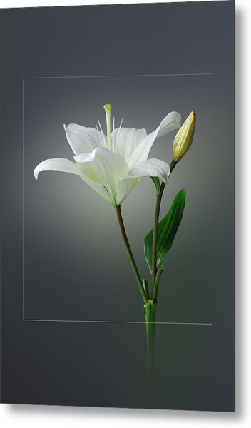 Flower..one Metal Print by Deepak Pawar