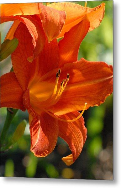Flowers 190 Metal Print by Joyce StJames