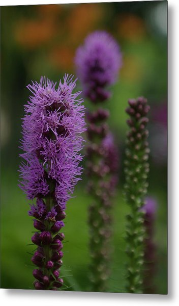 Flowers 4 Metal Print by Eric Workman