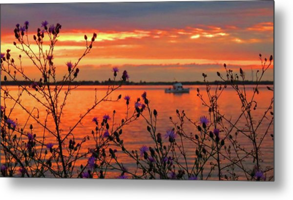 Flowers Along The Shore At Tibbetts Point  Metal Print