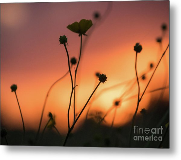 Flowers At Sunset Metal Print