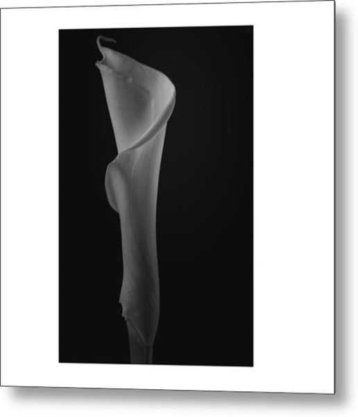 #flowers #flower #petal #petals #nature Metal Print