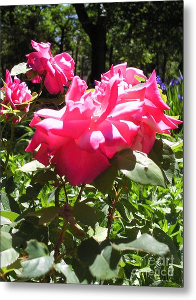 Flowers In The Garden Vi Metal Print by Daniel Henning