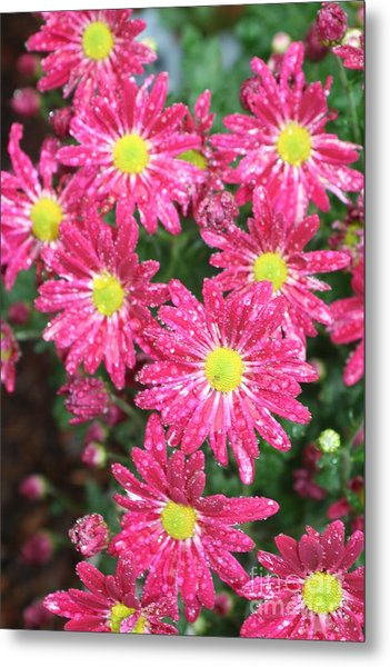 Flowers In The Rain Metal Print by Amy Holmes