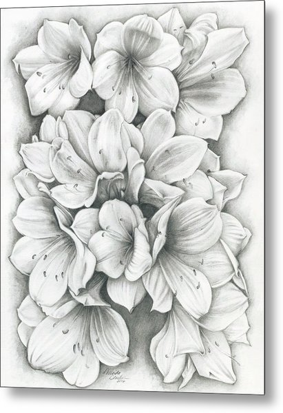 Clivia Flowers Pencil Metal Print