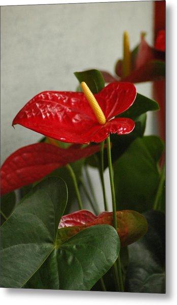 Flowers Rising Metal Print by Lori Mellen-Pagliaro