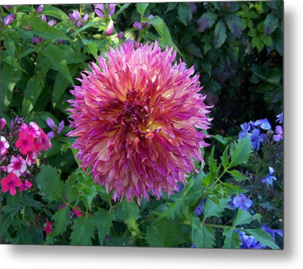 Fluffy Flower Metal Print by Colleen Neff
