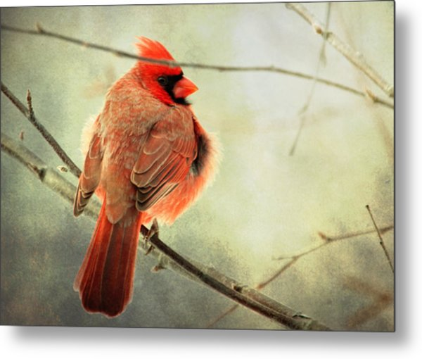 Fluffy Winter Cardinal Metal Print