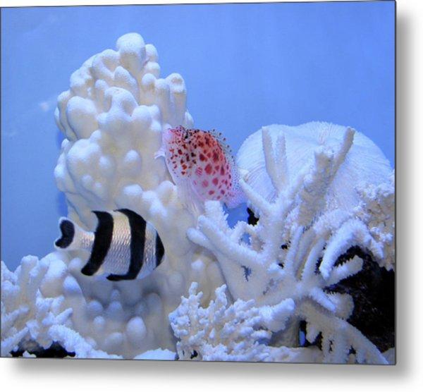 Fluid Fish Painting Metal Print