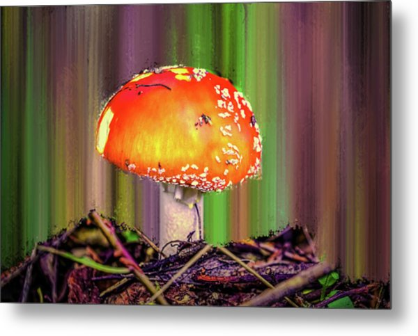 Metal Print featuring the photograph Fly Agaric #g7 by Leif Sohlman