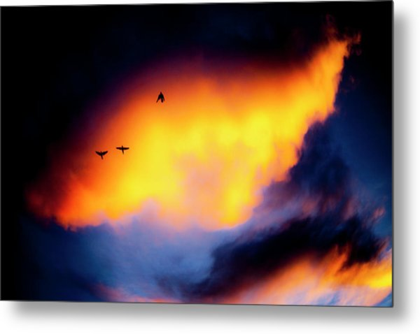 Metal Print featuring the photograph Fly Away by Eric Christopher Jackson