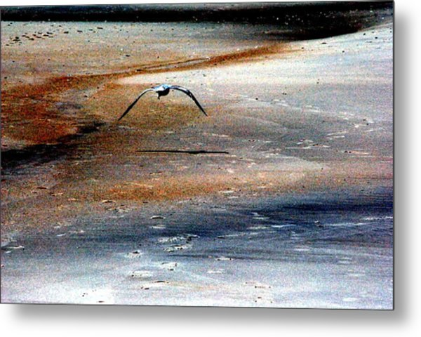 Fly Away Metal Print by Robert Scauzillo