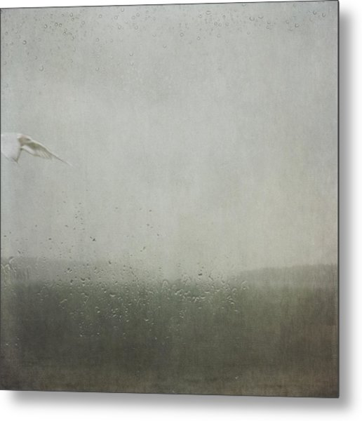 Metal Print featuring the photograph Fly Between The Raindrops by Sally Banfill