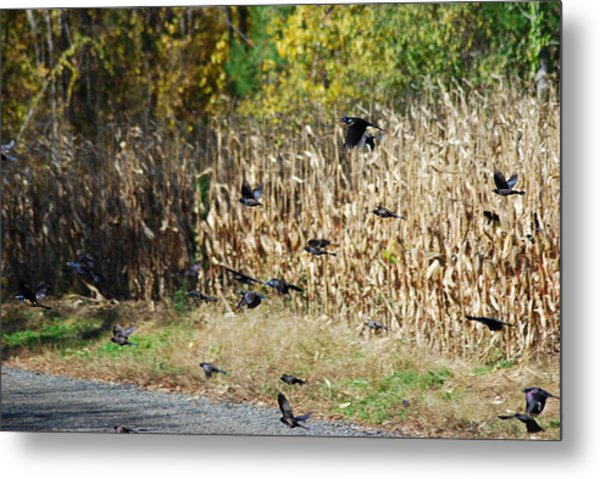 Fly For It Metal Print by Clay Peters Photography