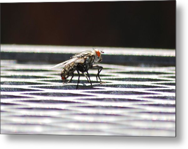 Fly Metal Print by Peter  McIntosh