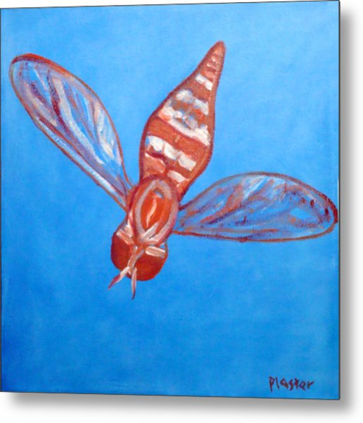 Fly South Metal Print by Scott Plaster
