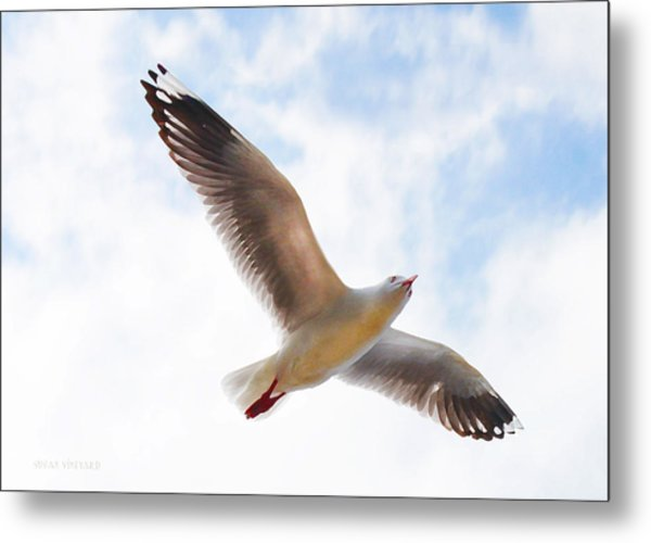 Flying Away From The Madness Metal Print
