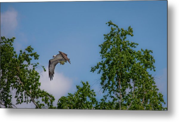 Metal Print featuring the photograph Flying Crappie by Onyonet  Photo Studios