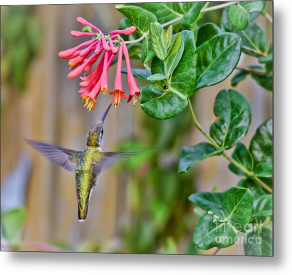 Flying Jewel Metal Print