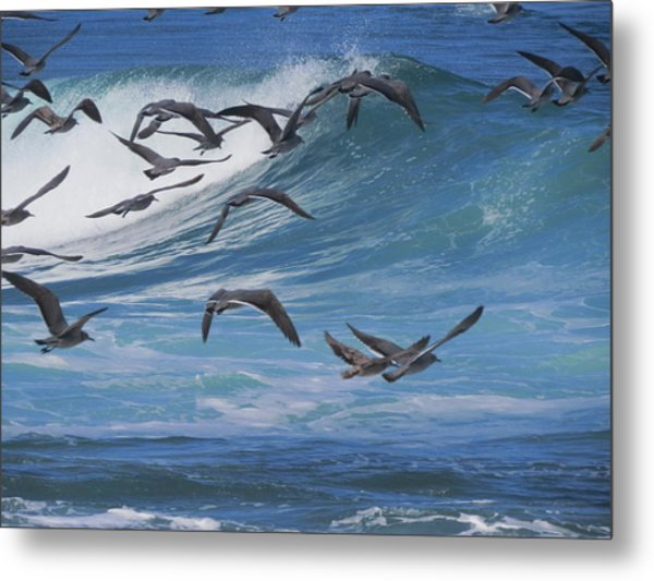 Flying Over The Sea Metal Print