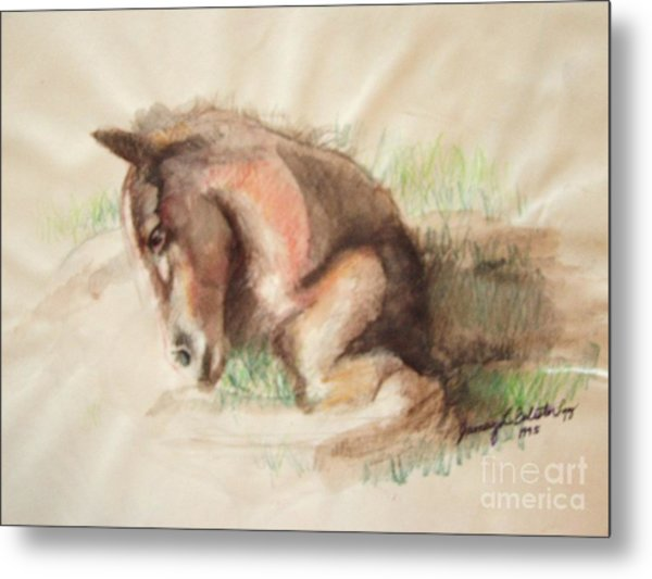 Foal Metal Print by Jamey Balester