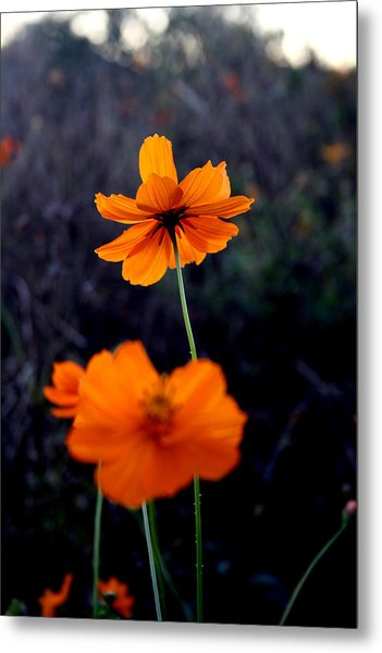 Focus Metal Print by Alexandra Harrell