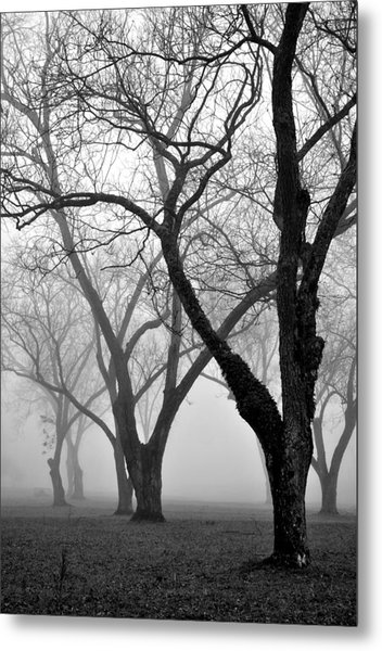 Fog 1 Metal Print by Beverly Hammond