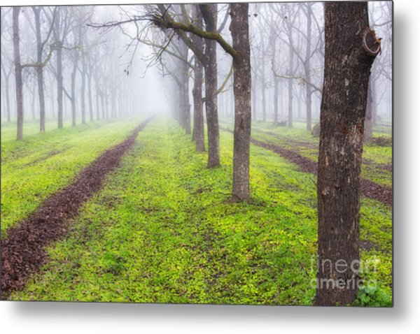 Fog And Orchard Metal Print