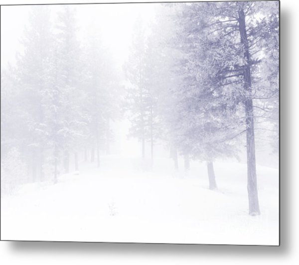 Fog And Snow Metal Print