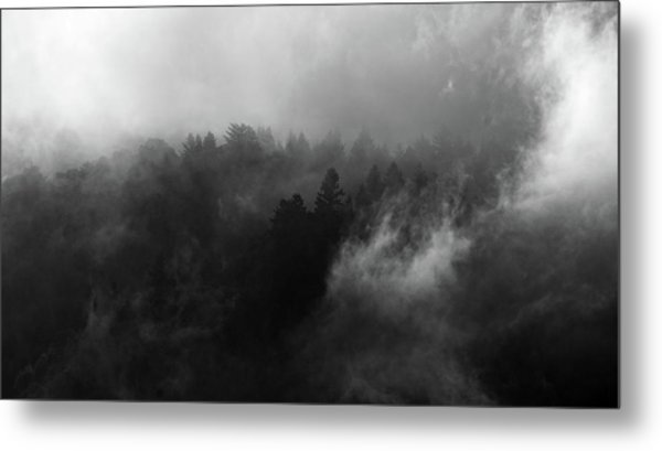 Fog Forest Metal Print