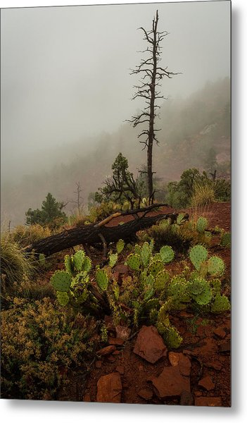 Fog Rolling In Metal Print