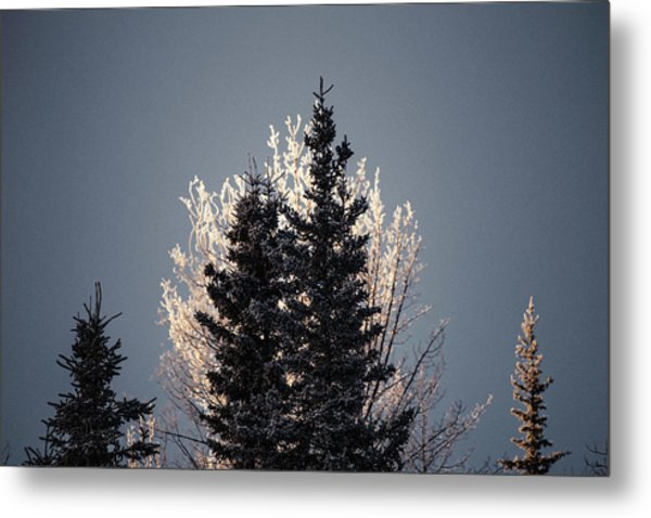 Metal Print featuring the photograph Foggy Days And Foggy Nights by Fred Denner